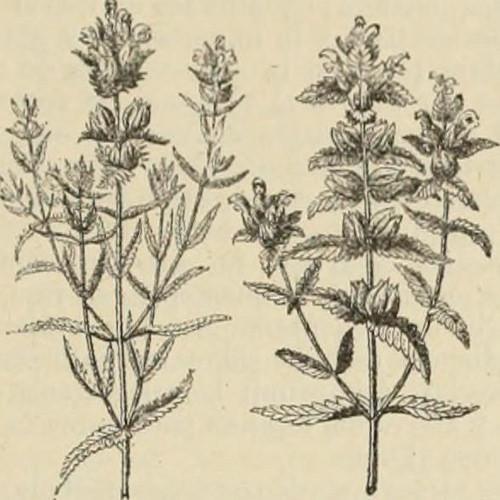 Amor botánico 4
