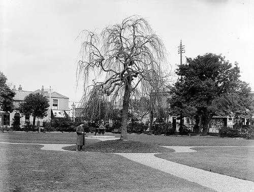La muerta del árbol 4