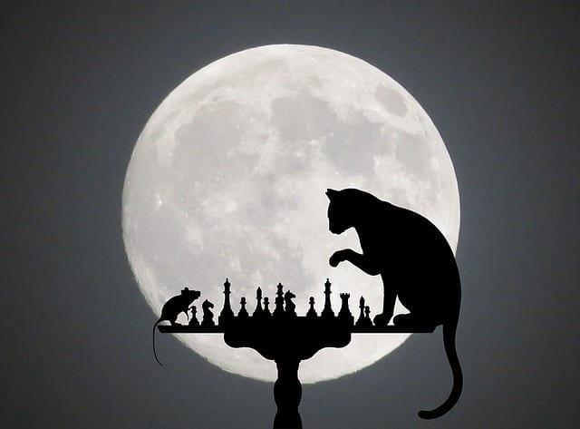 El gato y el ratón hacen vida en común 6