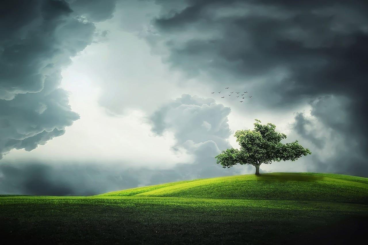 El árbol inútil 1
