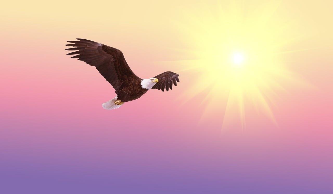 El águila y la flecha 1